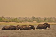 overstekende olifanten