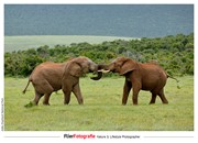 2 elephants at Addo Elephant National Park ZA