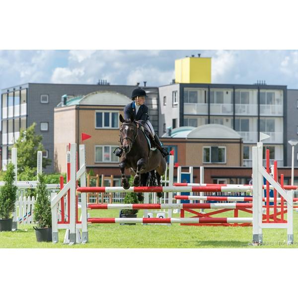 paarden springen 2
