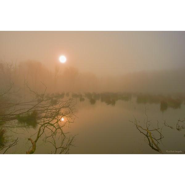 mist boven moeras